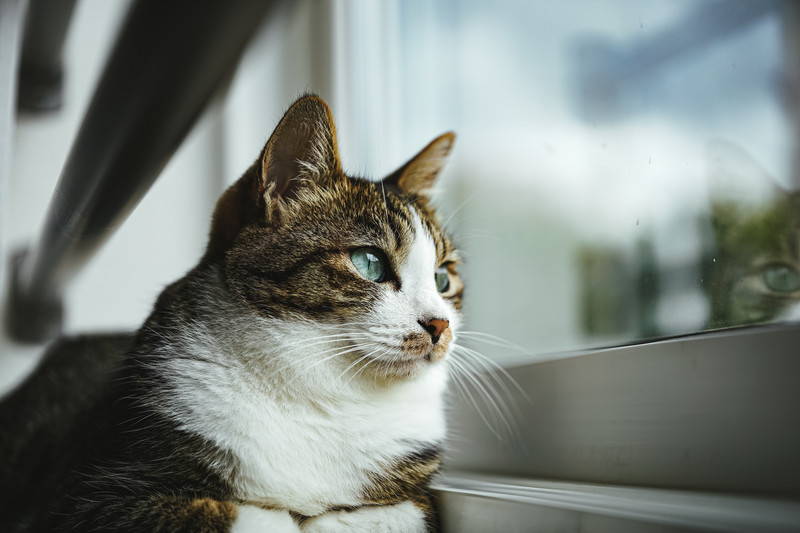 cat 猫 ネコ